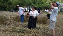 Tradicijska kosidba žita